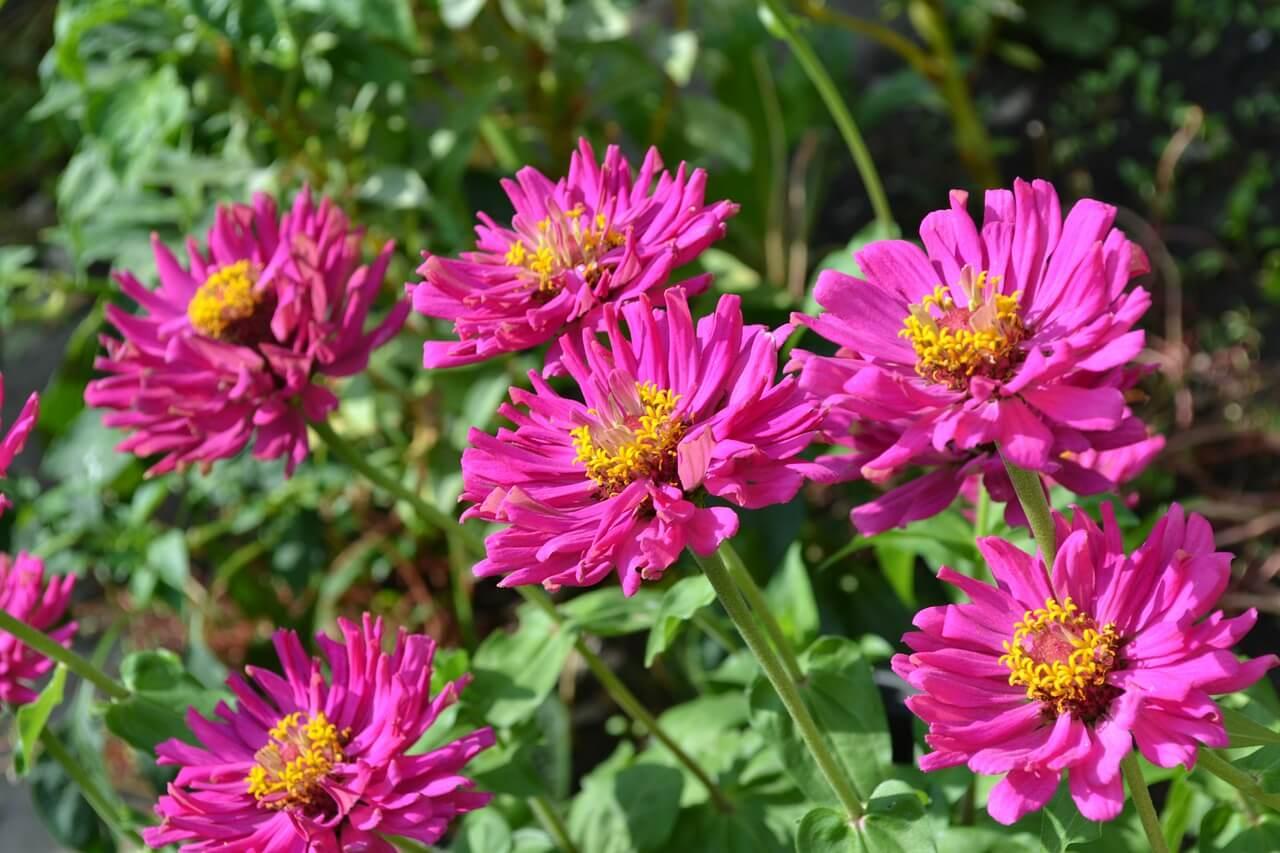 Floriculture : une aubaine sous-exploitée pour la libre-entreprise