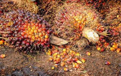 Interdiction d'exporter l'huile de palme: entrave à la liberté économique