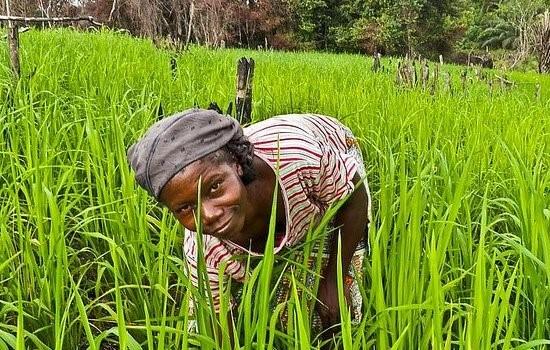 Burundi: la femme et l'agriculture, l'exemple concret de la nécessité du droit à l'héritage.